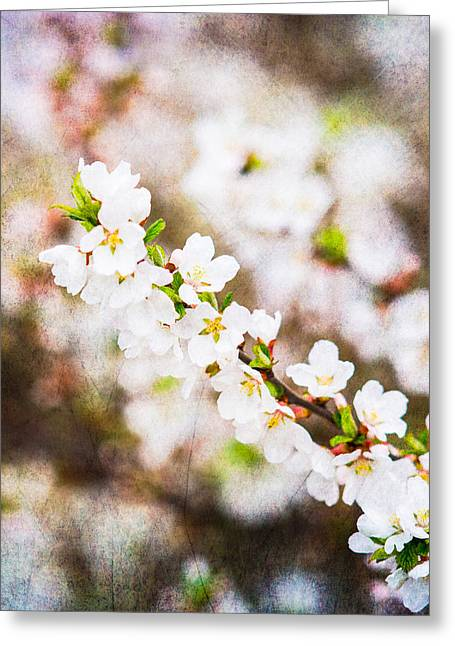 Fruit Tree Art Greeting Cards - Mysteries Of Spring 12 - Square Greeting Card by Alexander Senin
