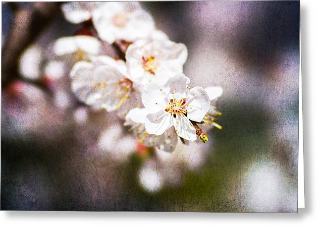 Fruit Tree Art Greeting Cards - Mysteries Of Spring 2 Greeting Card by Alexander Senin