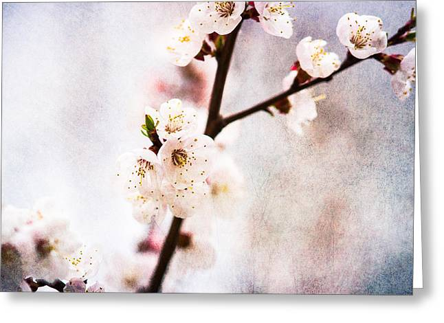 Fruit Tree Art Greeting Cards - Mysteries Of Spring 3 Greeting Card by Alexander Senin