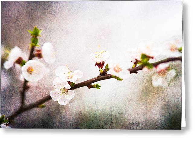 Fruit Tree Art Greeting Cards - Mysteries Of Spring 4 Greeting Card by Alexander Senin