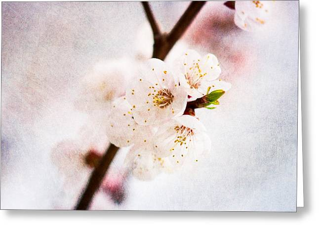 Fruit Tree Art Greeting Cards - Mysteries Of Spring 5 Greeting Card by Alexander Senin