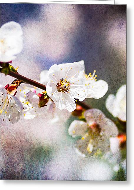 Fruit Tree Art Greeting Cards - Mysteries Of Spring 6 - Square Greeting Card by Alexander Senin