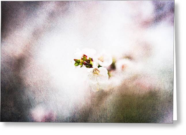 Fruit Tree Art Greeting Cards - Mysteries Of Spring 7 Greeting Card by Alexander Senin