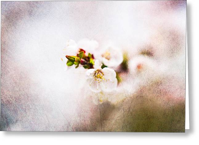 Fruit Tree Art Greeting Cards - Mysteries Of Spring 7 - Square Greeting Card by Alexander Senin