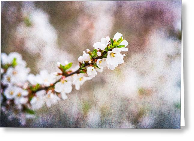 Fruit Tree Art Greeting Cards - Mysteries Of Spring 8 Greeting Card by Alexander Senin
