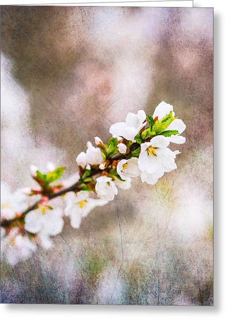 Fruit Tree Art Greeting Cards - Mysteries Of Spring 8 - Square Greeting Card by Alexander Senin