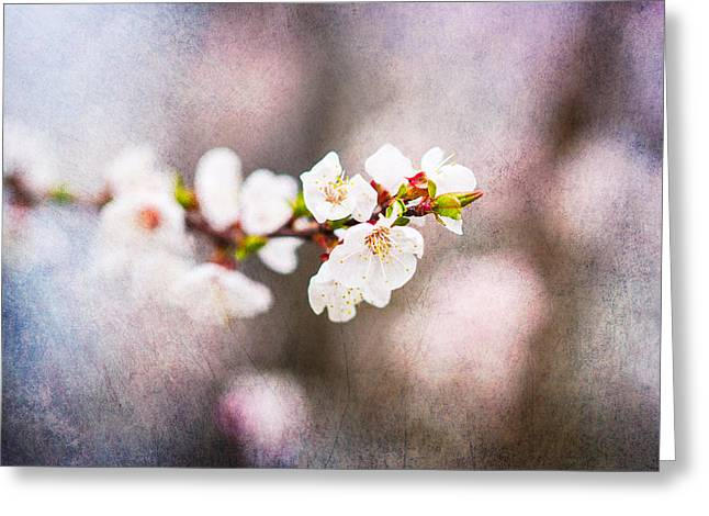 Fruit Tree Art Greeting Cards - Mysteries Of Spring 9 Greeting Card by Alexander Senin
