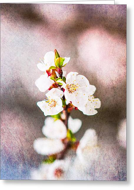 Fruit Tree Art Greeting Cards - Mysteries Of Spring 9 - Square Greeting Card by Alexander Senin