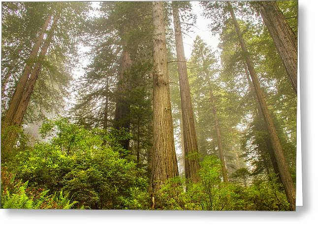 Damnation Greeting Cards - Mysteries of the Redwoods Greeting Card by Kunal Mehra