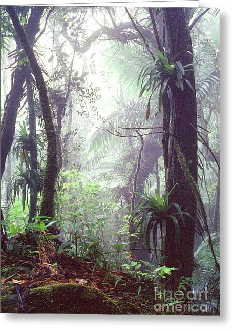 Puerto Rico Greeting Cards - Mysterious Misty Rainforest Greeting Card by Thomas R Fletcher