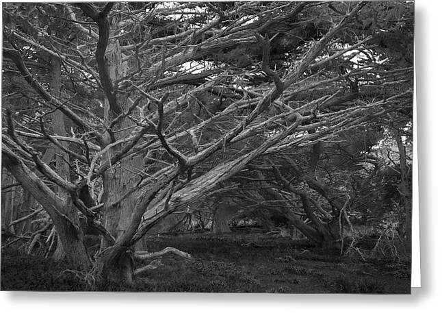 Point Lobos Greeting Cards - Mystery Forest Greeting Card by Friedhelm Golz
