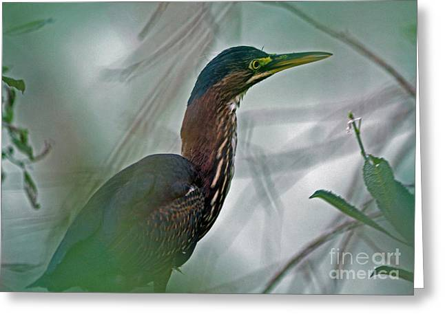 Mystery In The Marsh Greeting Card by Inspired Nature Photography Fine Art Photography