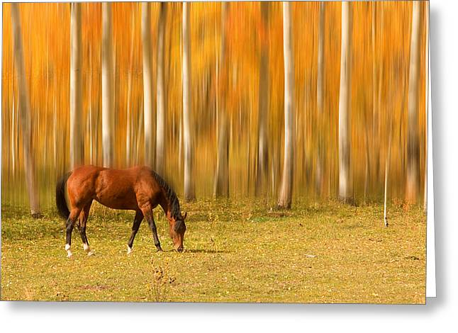 Horse Images Greeting Cards - Mystic Autumn Grazing Horse Greeting Card by James BO  Insogna