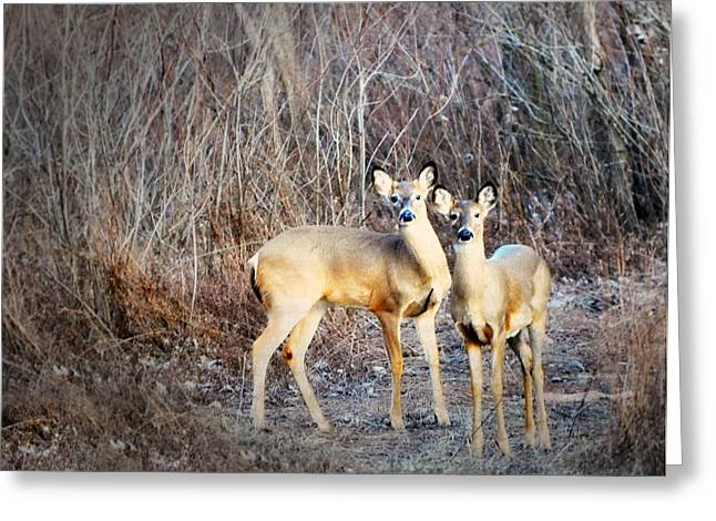 Mystic Duo Greeting Card by Marty Koch