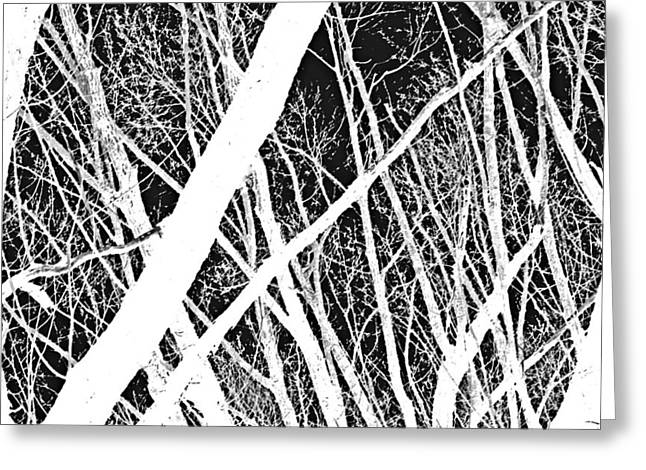 Abstract Expression Photographs Greeting Cards - Mystic Forest Greeting Card by Steven Milner