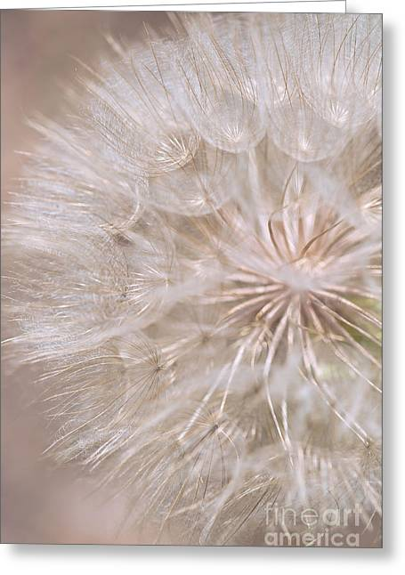 Parachute Ball Greeting Cards - Goatsbeard - Fairy Parachute  Greeting Card by Gwen Gibson