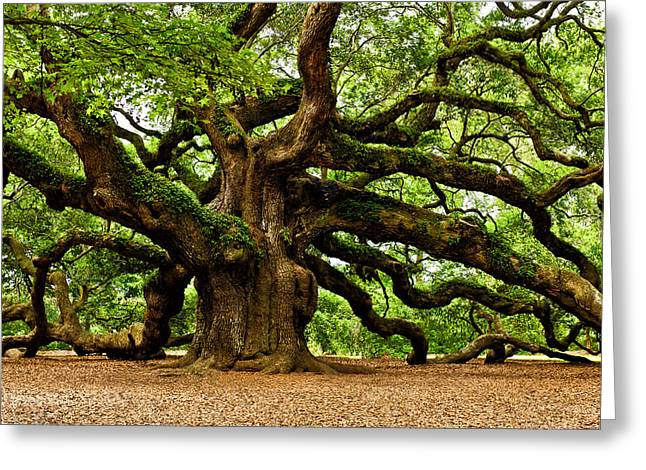 Printed Greeting Cards - Mystical Angel Oak Tree Greeting Card by Louis Dallara