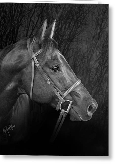 Crazy Horse Greeting Cards - Mystical Black Bridled Horse Greeting Card by Renee Forth-Fukumoto