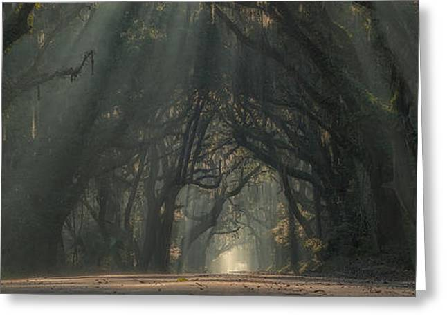 Mystical Landscape Greeting Cards - Mystical Charleston South Carolina road with sunbeams through the oaks Greeting Card by Keith Briley