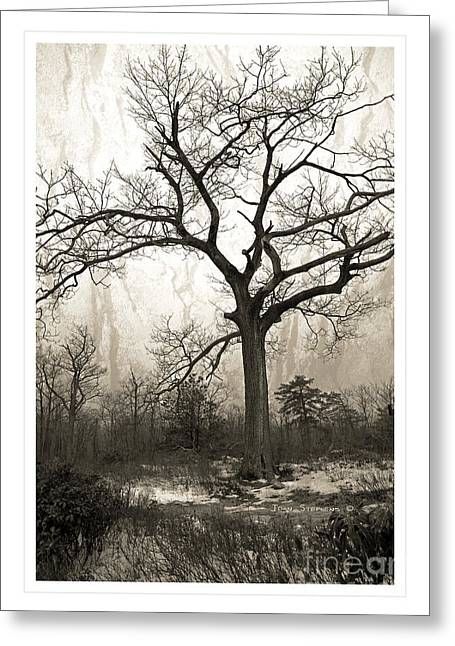 Winter Scenes Rural Scenes Greeting Cards - Mystical Forest Greeting Card by John Stephens
