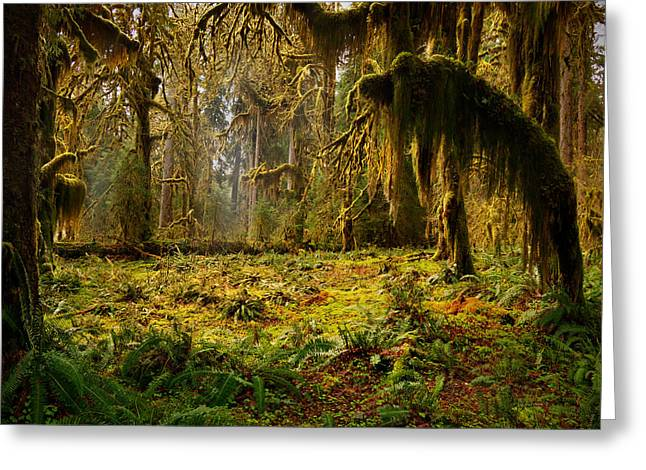 Onp Greeting Cards - Mystical Forest Greeting Card by Leland D Howard