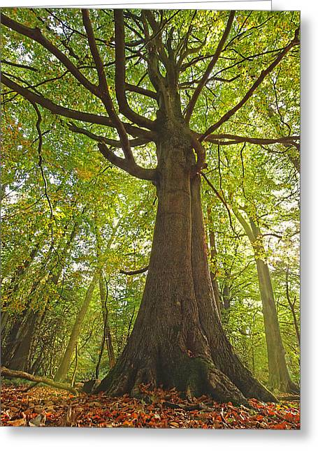 Mystical Landscape Greeting Cards - Mystical Forest Tree Greeting Card by Gill Billington