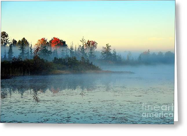 Fall Trees Greeting Cards - Mystical Mist Greeting Card by Terri Gostola