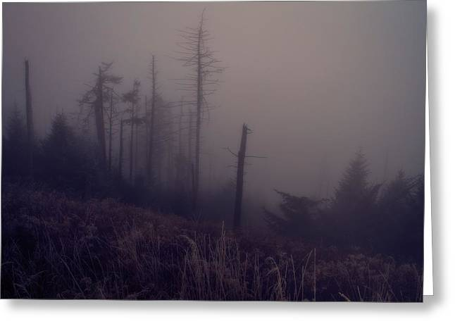 Clingmans Dome Greeting Cards - Mystical Morning Fog Greeting Card by Dan Sproul