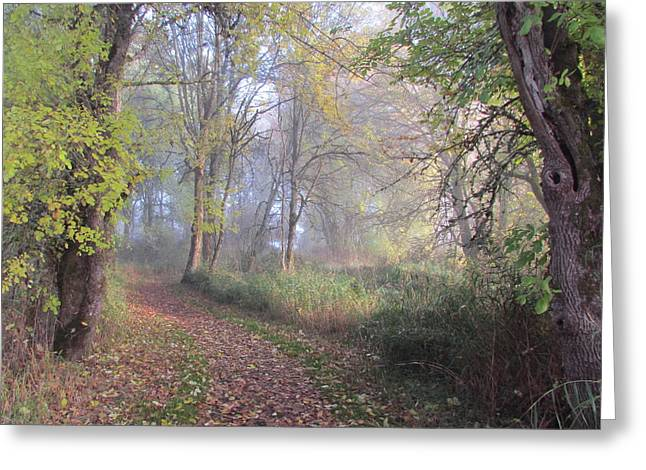 Wildlife Refuge. Greeting Cards - Mystical Path Greeting Card by Angie Vogel