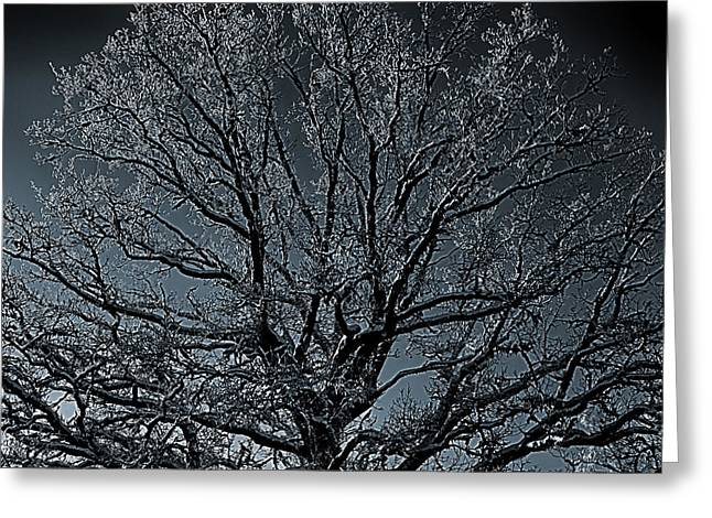 Mystical Landscape Photographs Greeting Cards - Mystical Tree Greeting Card by Christian Lagereek