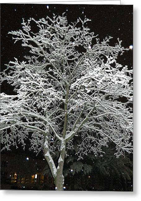 Blizzard Scenes Greeting Cards - Mystical Winter Beauty Greeting Card by Emmy Marie Vickers