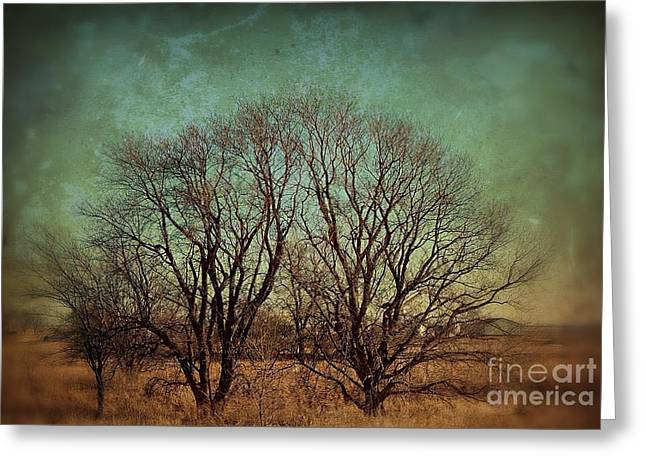 Tress Greeting Cards - N02201524 Greeting Card by Jim Hansen