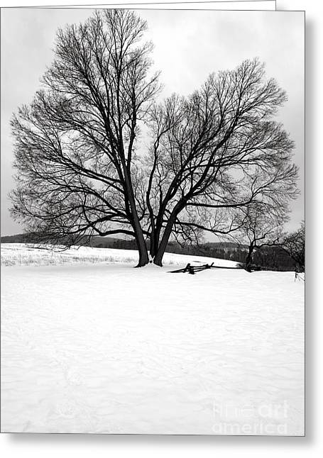 Valley Forge Greeting Cards - Naked and Starving as They Are Greeting Card by Olivier Le Queinec