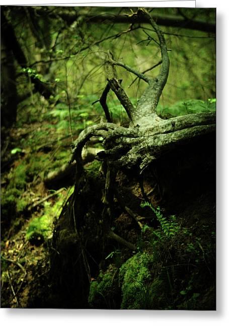 Tree Roots Photographs Greeting Cards - Naked Awakening Greeting Card by Rebecca Sherman