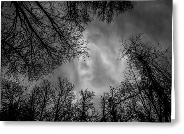 Naked Branches Greeting Card by Bob Orsillo