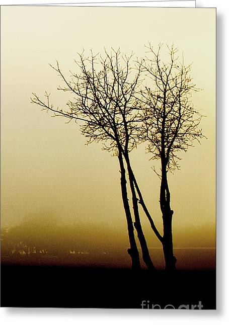 Laura Wrede Greeting Cards - Naked Trees 1 Greeting Card by Artist and Photographer Laura Wrede