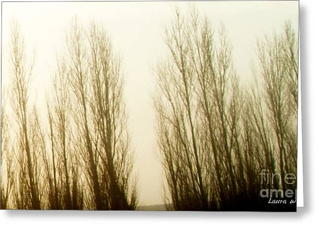 Laura Wrede Greeting Cards - Naked Trees 3 Greeting Card by Artist and Photographer Laura Wrede