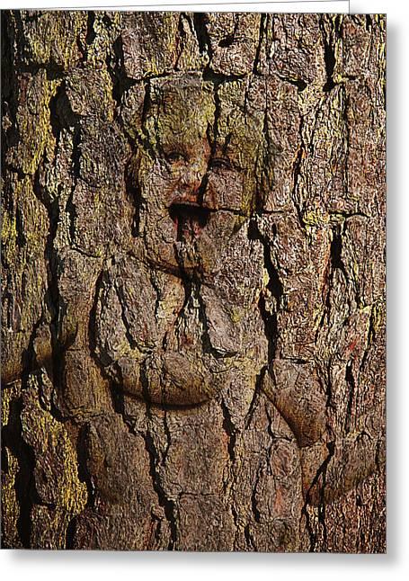 Appalachian Greeting Cards - Naked Wood Nymph Greeting Card by John Haldane