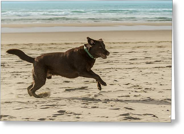 Dog Play Beach Greeting Cards - Name something more fun than this Greeting Card by Jean Noren