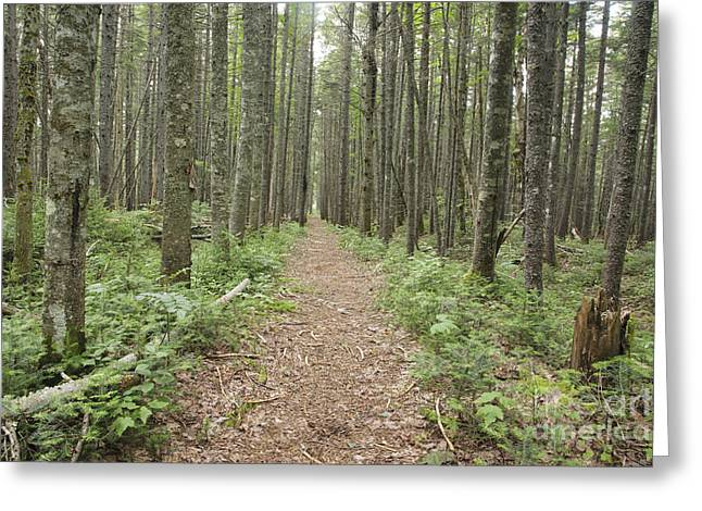 New Hampshire Logging Greeting Cards - Nancy Pond Trail - White Mountains New Hampshire  Greeting Card by Erin Paul Donovan