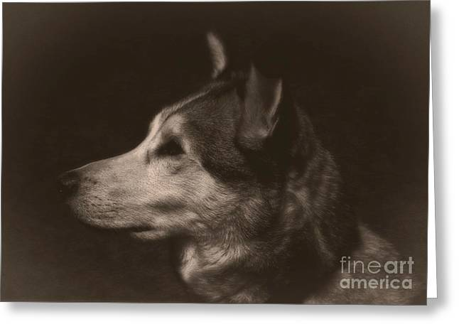 Huskies Mixed Media Greeting Cards - Nanuk of the North Greeting Card by Marjorie Imbeau