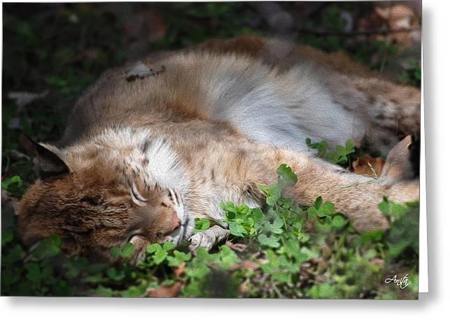 Baby Bobcat Greeting Cards - Nap Time Greeting Card by Anita Hubbard