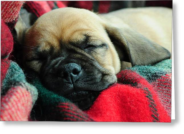 Pugs Greeting Cards - Nap Time Greeting Card by Lisa  Phillips