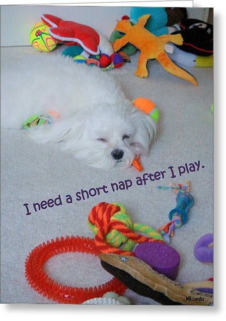 Toy Maltese Photographs Greeting Cards - Nap Time Greeting Card by Mary Beth Landis