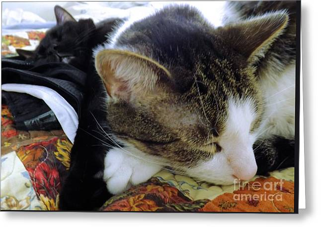 Recently Sold -  - Unique Art Greeting Cards - Nap Time Greeting Card by Robyn King