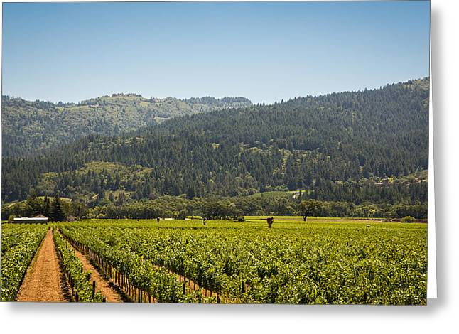 Napa Valley Digital Greeting Cards - Napa Greeting Card by Clay Townsend