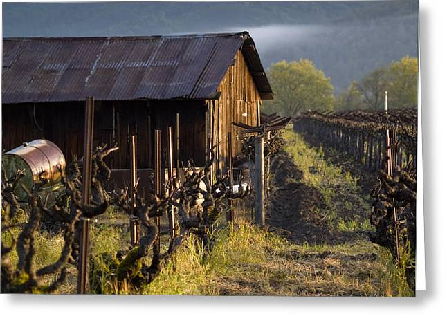 Sheds Greeting Cards - Napa Morning Greeting Card by Bill Gallagher