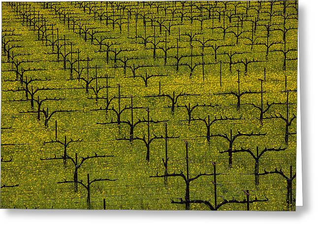 Wine Country. Greeting Cards - Napa Mustard Grass Greeting Card by Garry Gay