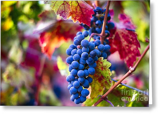 Bunch Of Grapes Photographs Greeting Cards - Bounty of Napa Valley II Greeting Card by George Oze