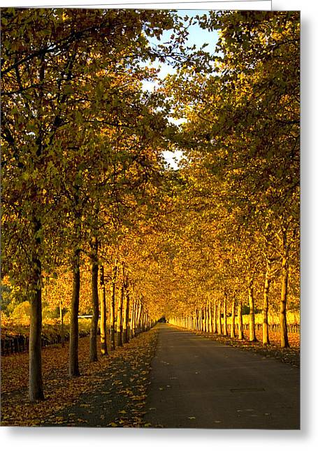 Napa Valley Greeting Cards - Napa Valley Fall Greeting Card by Bill Gallagher
